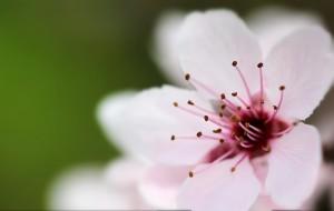 flower-776841_1920
